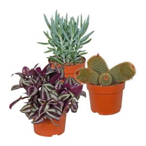 GARDEN FEELINGS     Kaktus / Sukkulente