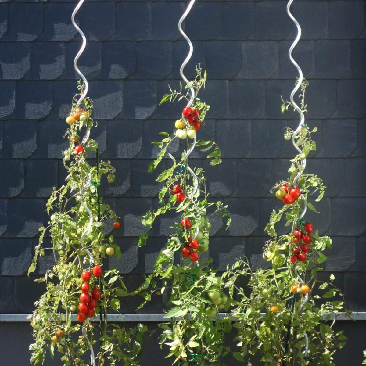 Bild 4 von GARDENLINE     Tomatenspiral- / Pflanzstäbe