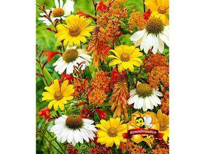 Staudenbeet Bienen-Magnet,15 Stück