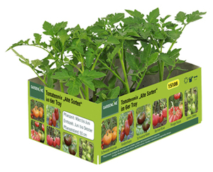 "GARDENLINE®  Tomatenmix ""Alte Sorten"", 6er-Tray"