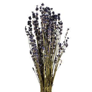 Lavendel getrocknet, L:20cm, lila