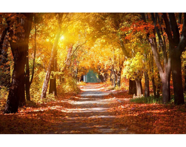 Fototapete Allee im Herbstwald