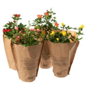 """Gartenrosen """"Flowercircus"""""""
