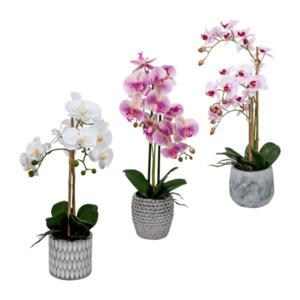 LIVING ART     Naturtreue Orchidee