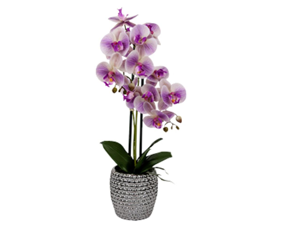 Bild 1 von casa deco Naturgetreue Orchidee im Topf