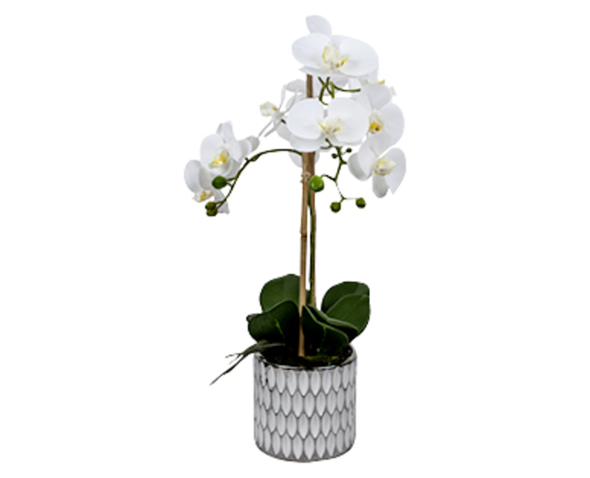Bild 3 von casa deco Naturgetreue Orchidee im Topf