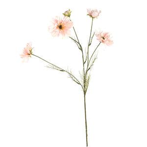 Stielblume Cosmea, L:75cm, hellrosa