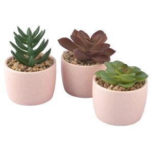 3 Deko-Sukkulenten im Keramiktopf
