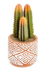 Kaktus in strukturiertem Topf