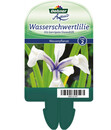 Bild 4 von Dehner Wasserschwertlilie