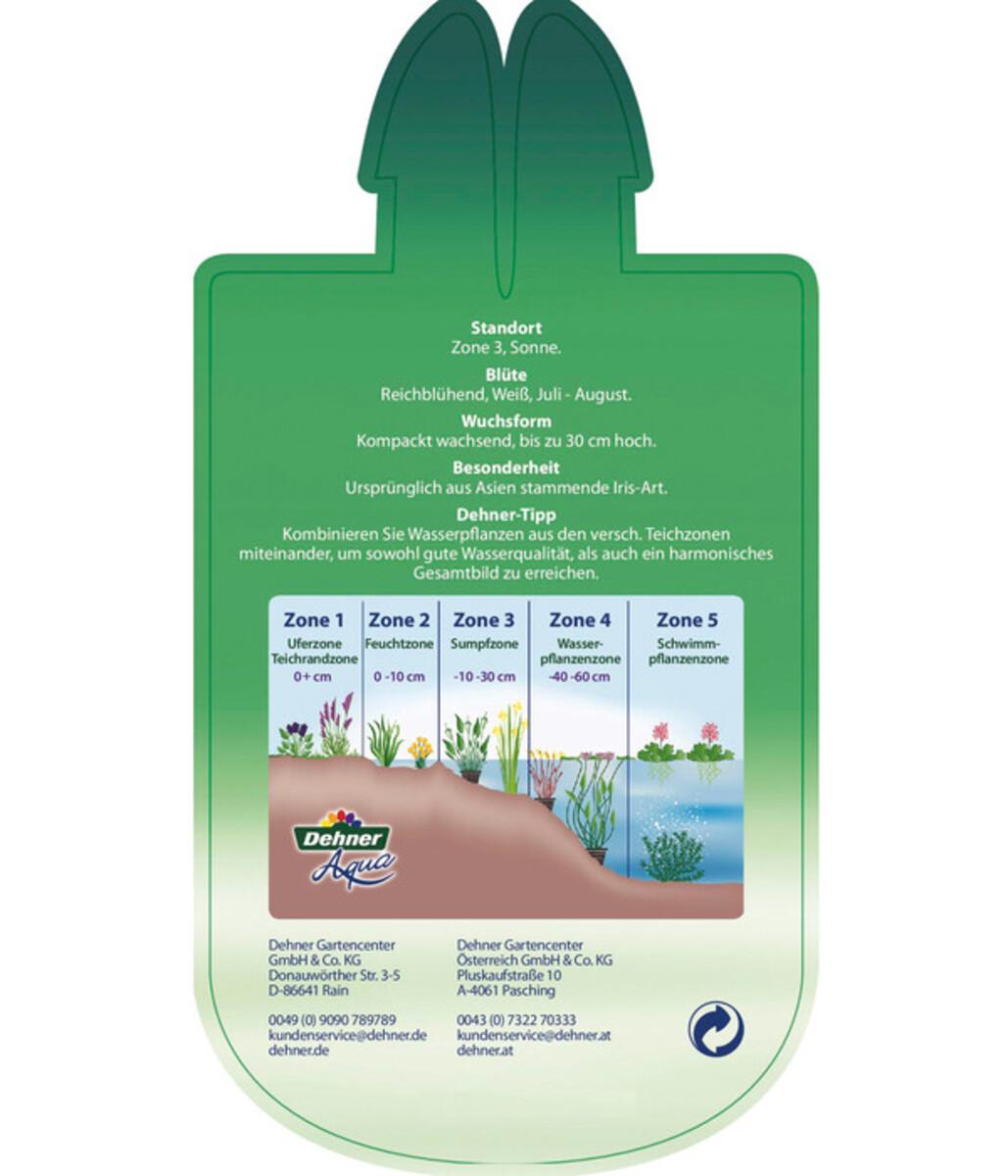 Bild 5 von Dehner Wasserschwertlilie