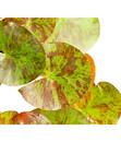 Bild 3 von Dehner Seerose 'Aurora'