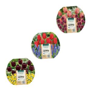 GARDENLINE     Blumenzwiebeln im Pflanzentray