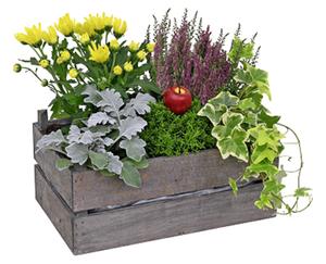 GARDENLINE®  Bepflanztes Gefäß/Korb
