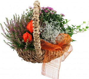 Pflanzenarrangement Henkelkorb Seegras ,  29 cm Korb