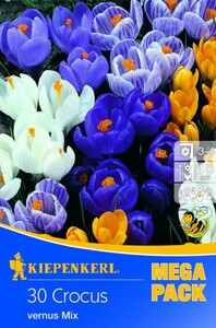 Kiepenkerl Blumenzwiebel Mega-Pack Crocus Grossblumiger Mix Crocus vernus, Inhalt: 30 Stück