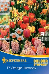 Kiepenkerl Herbstblumenzwiebel Tulpen + Narzissen Orange Harmony Symphony of Colours, Inhalt: 17 Stück