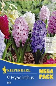 Kiepenkerl Blumenzwiebeln Hyacinthus-Mix Mega-Pack Inhalt: 9 Stück