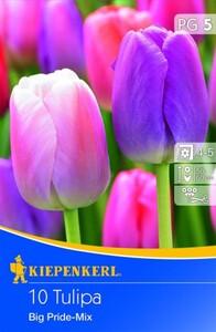 Kiepenkerl Blumenzwiebel Tulpe Big Pride ,  Tulipa x Hybrida, Inhalt: 10 Stück
