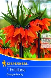 Kiepenkerl Blumenzwiebel Fritillaria Orange Beauty ,  Fritillaria imperialis, Inhalt: 1 Stück