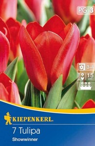 Kiepenkerl Herbstblumenzwiebel Tulpen Showwinner ,  Tulipa kaufmanniana, Inhalt: 7 Stück