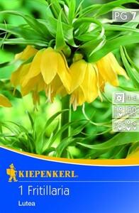 Kiepenkerl Blumenzwiebel Kaiserkrone Lutea ,  Fritillaria imperialis, Inhalt: 1 Stück