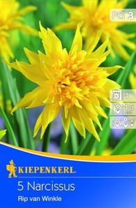 Kiepenkerl Blumenzwiebel Narzisse Rip van Winkle ,  Narcissus minor, Inhalt: 5 Stück