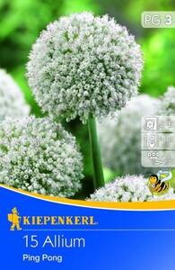 Kiepenkerl Blumenzwiebel Allium Ping Pong ,  Allium caeruleum, Inhalt: 15 Stück