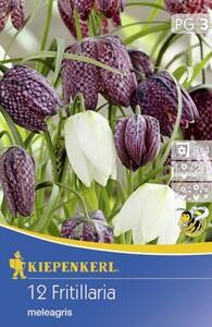 Kiepenkerl Blumenzwiebeln Fritillaria meleagris Mix ,  Inhalt: 12 Stück