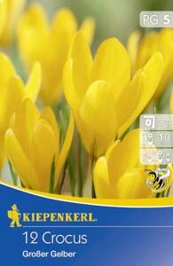 Kiepenkerl Blumenzwiebel Crocus Großer Gelber ,  Crocus vernus, Inhalt: 12 Stück