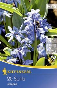 Kiepenkerl Blumenzwiebeln Scilla siberica ,  Inhalt: 20 Stück