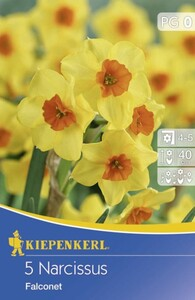 Kiepenkerl Blumenzwiebeln Narcissus Falconet ,  Inhalt: 5 Stück