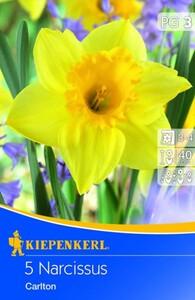 Kiepenkerl Blumenzwiebel Narcissus Carlton ,  Narcissus pseudonarcissus, Inhalt: 5 Stück