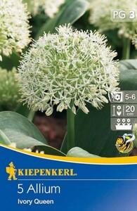 Kiepenkerl Herbstblumenzwiebel Allium Ivory Queen ,  Allium karataviense, Inhalt: 5 Stück