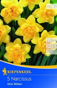 Kiepenkerl Blumenzwiebel Narcissus Dick Wilde ,  Narcissus pseudonarcissus, Inhalt: 5 Stück