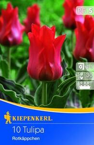 Kiepenkerl Blumenzwiebel Tulipa Rotkäppchen ,  Tulipa greigii, Inhalt: 10 Stück