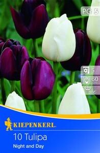 Kiepenkerl Blumenzwiebel Tulpe Night and Day ,  Tulipa x Hybrida, Inhalt: 10 Stück