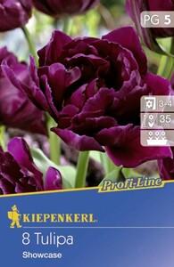 Kiepenkerl Blumenzwiebeln Profi-Line Tulipa Showcase ,  Inhalt: 8 Stück
