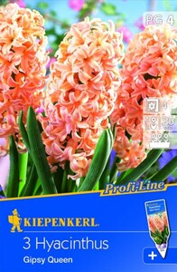 Kiepenkerl Blumenzwiebel Hyacinthe Gipsy Queen ,  Hyacinthus orientalis, Inhalt: 3 Stück