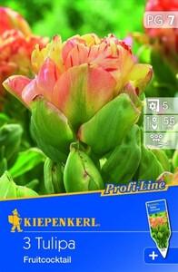 Kiepenkerl Blumenzwiebel Tulpe Fruit Cocktail ,  Tulipa x Hybrida, Inhalt: 3 Stück