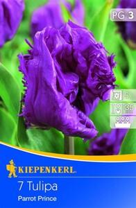 Kiepenkerl Blumenzwiebel Tulpe Parrot Prince ,  Tulipa x Hybrida, Inhalt: 10 Stück