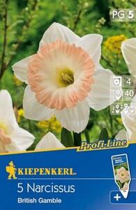 Kiepenkerl Herbstblumenzwiebel Narzissen British Gamble ,  Narcissus pseudonarcissus, Inhalt: 5 Stück