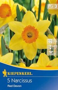 Kiepenkerl Herbstblumenzwiebel Narzissen Red Devon ,  Narcissus pseudonarcissus, Inhalt: 5 Stück