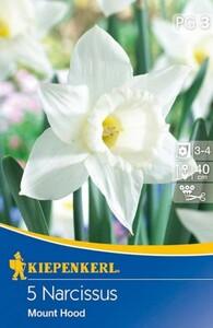 Kiepenkerl Herbstblumenzwiebel Narzissen Mount Hood ,  Narcissus pseudonarcissus, Inhalt: 5 Stück