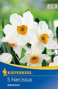 Kiepenkerl Herbstblumenzwiebel Narzissen Geranium ,  Narcissus pseudonarcissus, Inhalt: 5 Stück