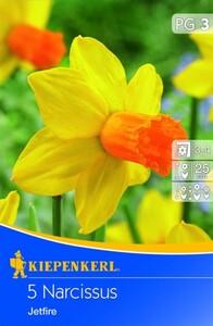 Kiepenkerl Blumenzwiebel Narzisse Jetfire ,  Narcissus cyclamineus, Inhalt: 5 Stück