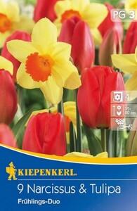 Kiepenkerl Herbstblumenzwiebel Tulpen + Narzissen Frühlingsduo ,  Inhalt: 9 Stück