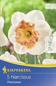 Kiepenkerl Blumenzwiebeln Narcissus Precocious ,  Inhalt: 5 Stück
