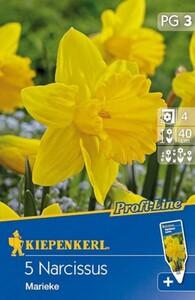 Kiepenkerl Herbstblumenzwiebel Narzissen Marieke ,  Narcissus pseudonarcissus, Inhalt: 5 Stück