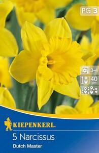 Kiepenkerl Herbstblumenzwiebel Narzissen Dutch Master ,  Narcissus pseudonarcissus, Inhalt: 5 Stück